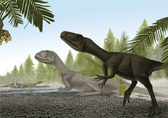 Allosaurus_juvenil
